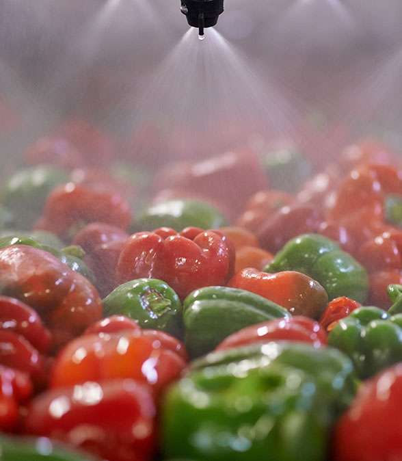 HACCP Design and Implementation for the Fresh Produce Industry